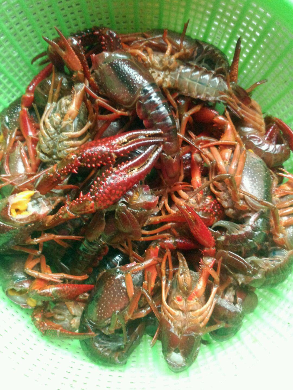 清理好的小龙虾,看见那个虾黄没?那可是美味,千万不能浪费了!