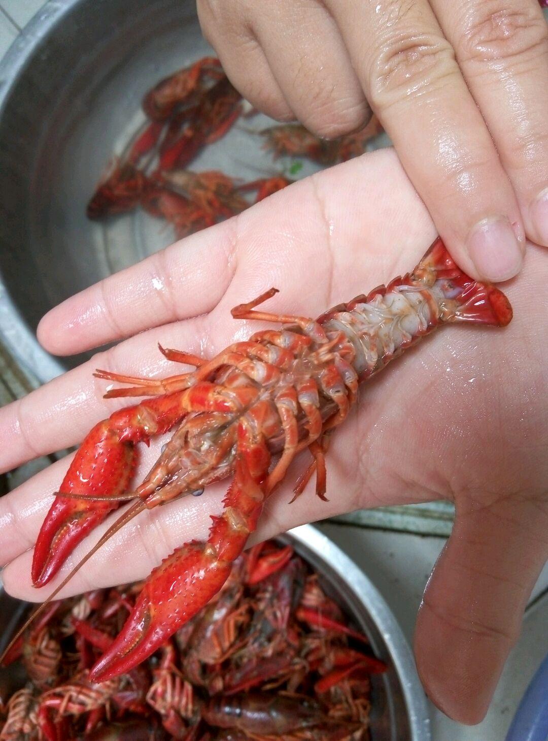小龙虾的做法图解4