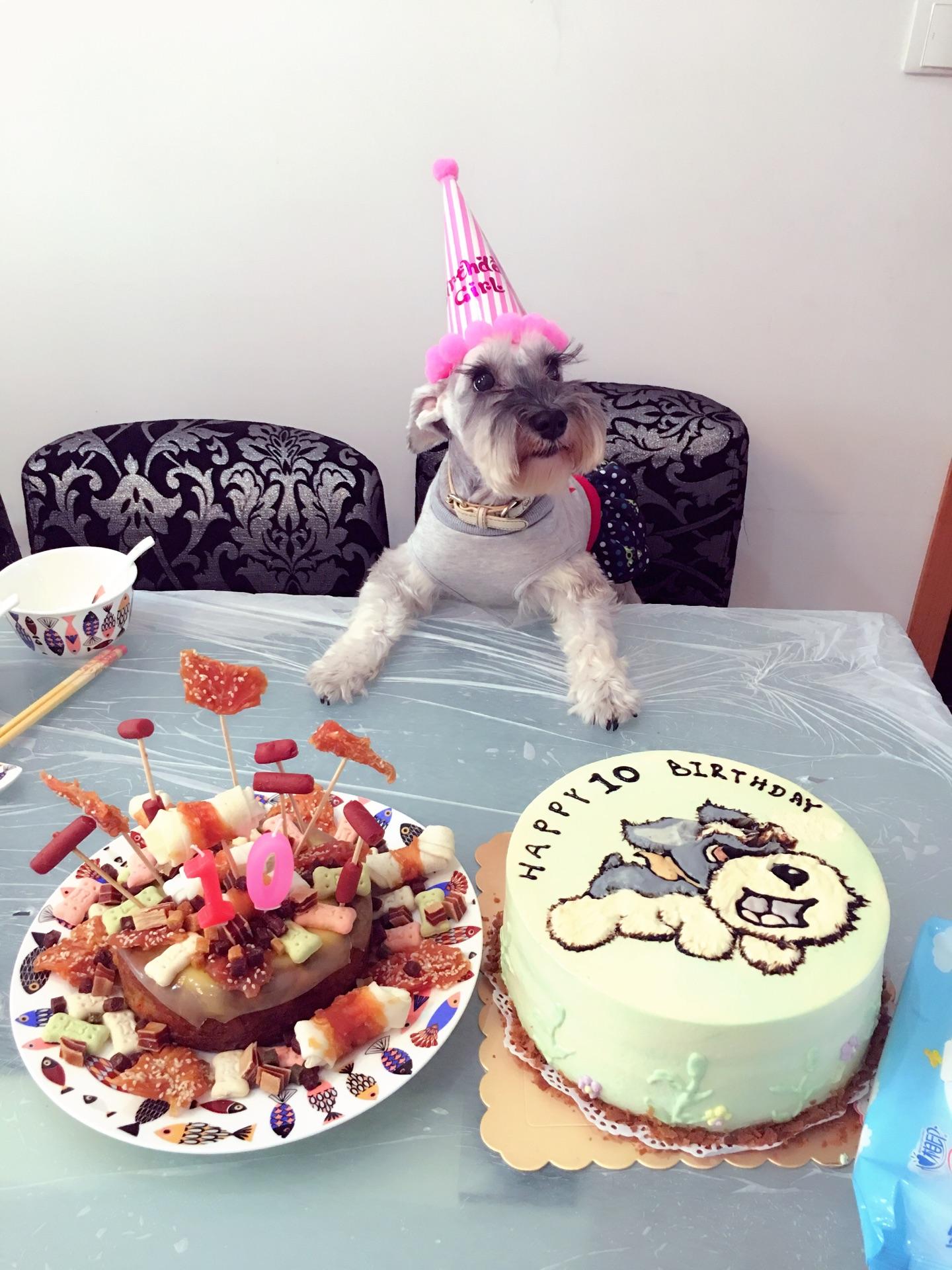 宠物狗狗的蛋糕
