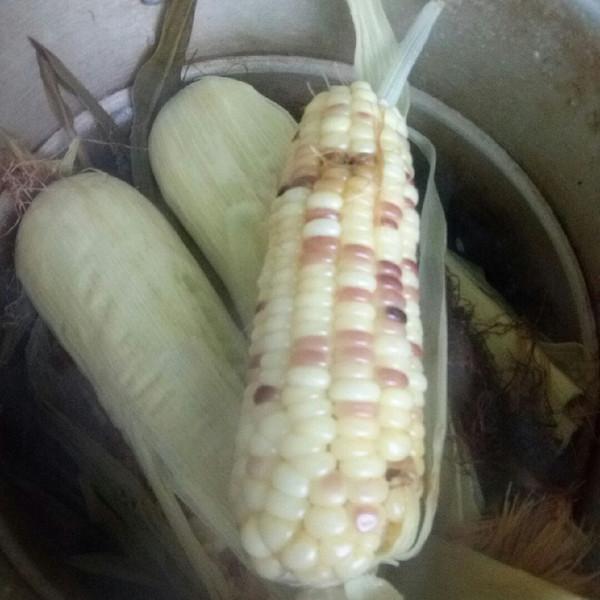 可爱哒麻麻的玉米棒做法的学习成果照_豆果美食