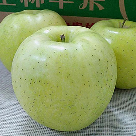 【限时特价】归田居 威海原株王林苹果4.8-5斤(大果,8个左右)