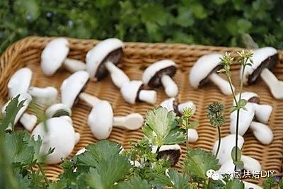 以假乱真的蛋白糖小蘑菇