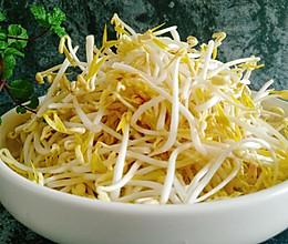 教你生又粗又脆的绿豆芽的做法