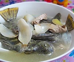 百合金鲴立鱼汤的做法