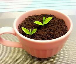可以吃的盆栽【奥利奥盆栽】的做法