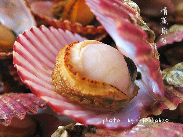 吃不够的小海鲜---清蒸扇贝的做法