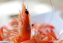 【白灼虾】活虾最原味的做法的做法