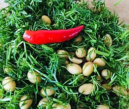 黄豆茴香的做法