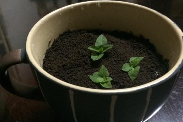 奥利奥盆栽的做法