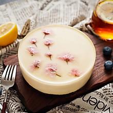 日食记丨酸奶冻芝士蛋糕