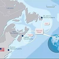 加拿大北极贝色拉的做法图解1