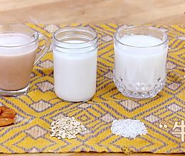3款植物奶的做法