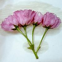 盐渍樱花(蜜渍樱花)的做法图解2