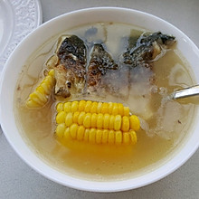 鲫鱼玉米汤