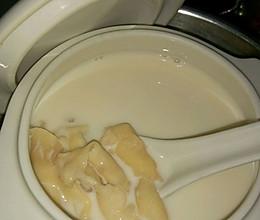 牛奶炖花胶的做法