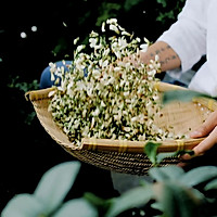 奶奶做的蒸槐花,对我来说是人间的无上美味。的做法图解1