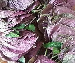 美味紫苏叶的做法