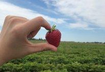 手工草莓果酱的做法