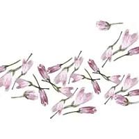 【手绘食谱】盐渍樱花 手造的暖意 任何工业化商品都比不过的做法图解3