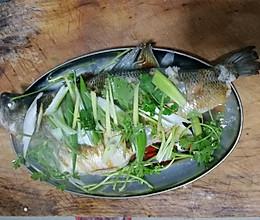 鲈鱼❤清蒸的做法