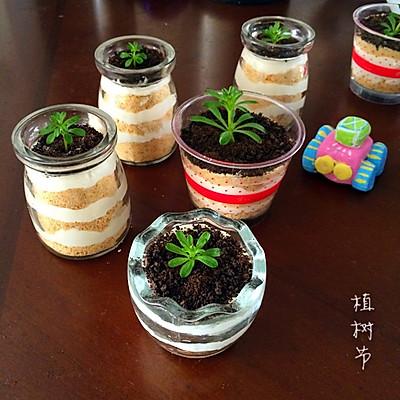 木糠杯盆栽