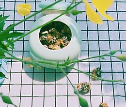 自制蒲公英茶的做法