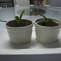 小盆栽的做法图解10