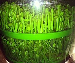 绿豆苗的做法