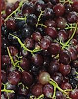 红葡萄酒的做法图解4