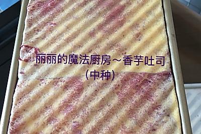香芋吐司(中种法)