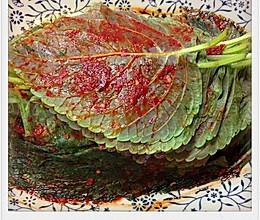松树下的姑娘--韩式腌苏子叶的做法