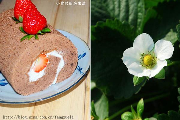 可可奶油草莓蛋糕卷】的做法的做法