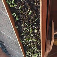 葵花籽苗芽菜的做法图解2