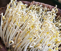 自发绿豆芽的做法