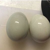 对抗熬夜食补:生地炖鸭蛋的做法图解2