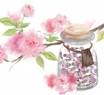 【手绘食谱】盐渍樱花 手造的暖意 任何工业化商品都比不过