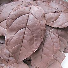 巧克力树叶