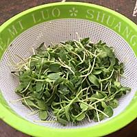葵花籽苗芽菜的做法图解5