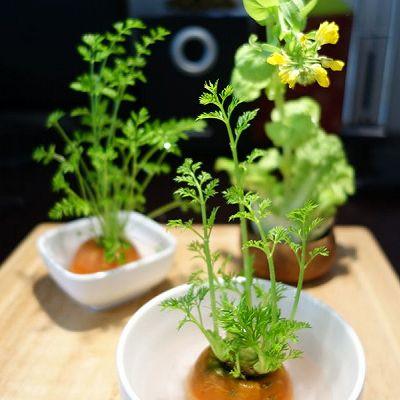 冬日小清新---蔬菜盆栽