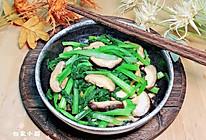 蚝油香菇菜心#李锦记旧庄蚝油鲜蚝鲜煮#的做法