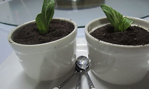 小盆栽的做法