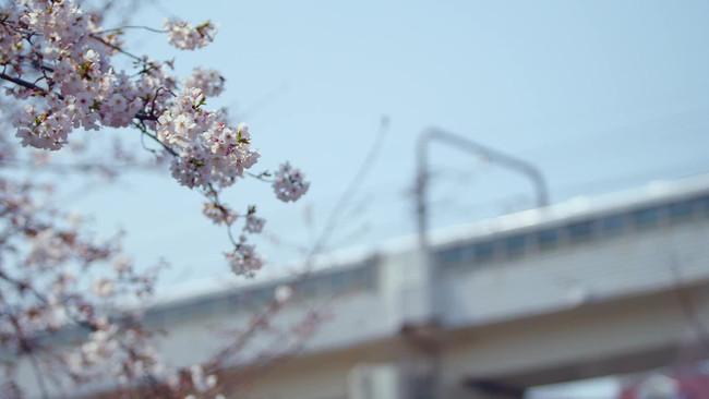 樱花曲奇饼干的做法