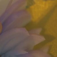 【初味日记】抖音爆款的百香果柠檬鸡爪!手残星人的福音来了!的做法图解5