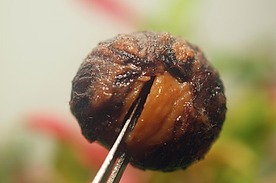 带着皮的糖煮栗子,你吃过吗?原来这么香甜与软糯