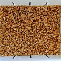 小麦草杨桃汁的做法图解2