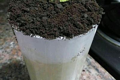快手甜品——盆栽奶茶奶盖