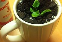 好玩盆栽奶茶的做法