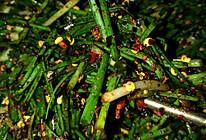胡椒野蒜(小蒜)的做法