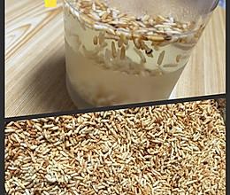 简单易学的刮油佳品一一焦米茶的做法