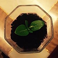 盆栽酸奶的做法图解4